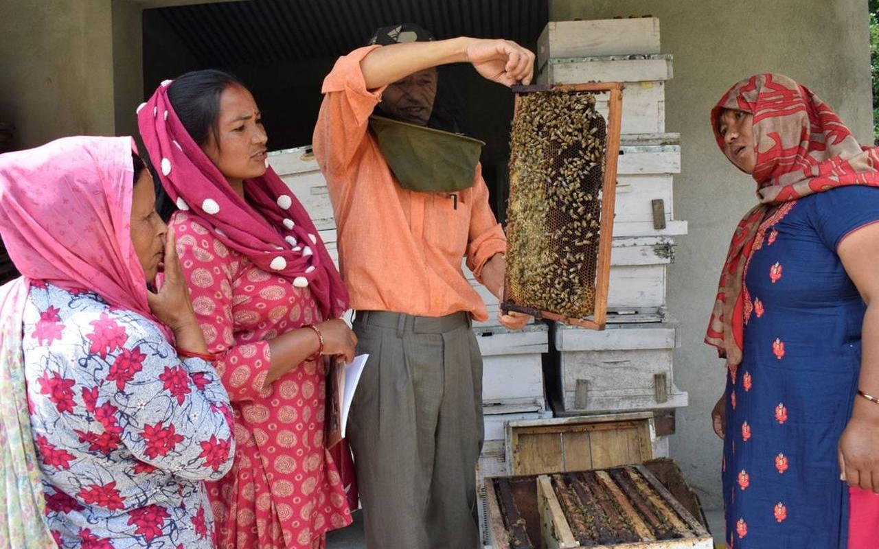 Promotion of livelihoods and income security through beekeeping for returning and potential migrants (pic: NEEDS/AWO International)
